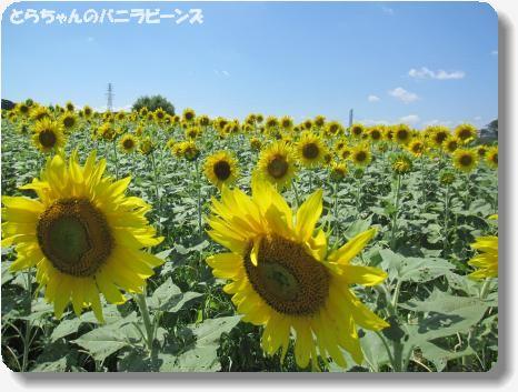 IMG_8625_convert_20130827160728.jpg