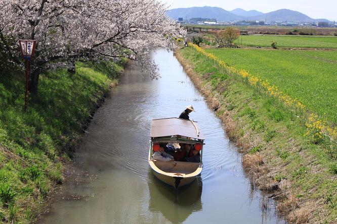 20130408近江八幡水郷8a