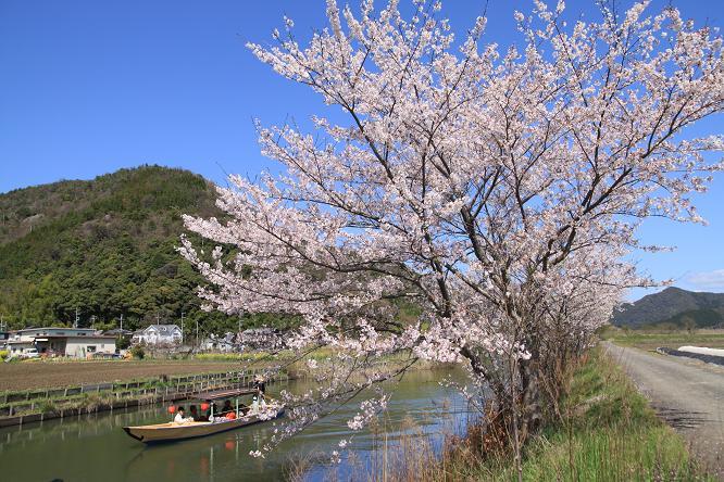 20130408近江八幡水郷12a