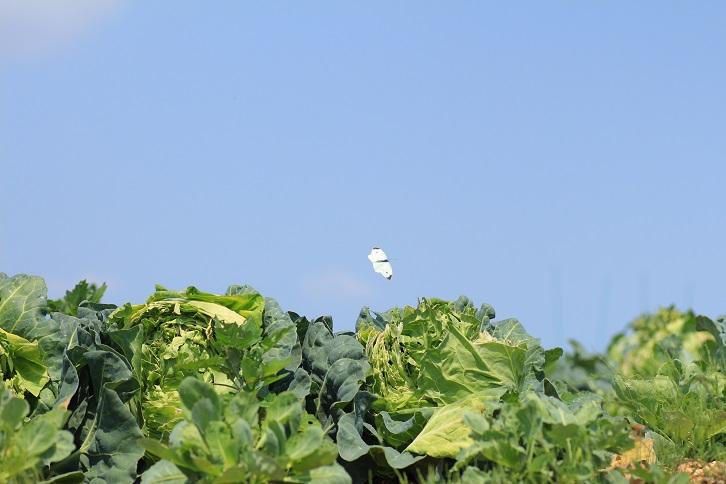 20130526池辺農業地区a