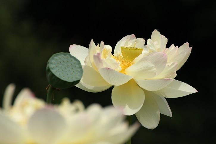 20130715山田富士公園4a