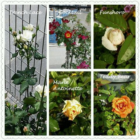 PhotoGrid_1369574673295.jpg