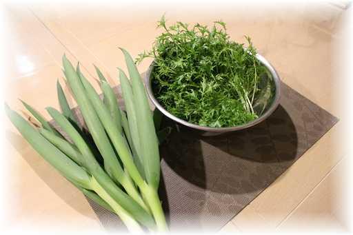 20130324ネギ水菜収穫
