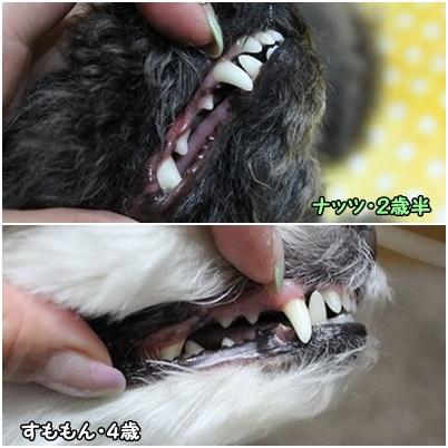 歯石チェーック★