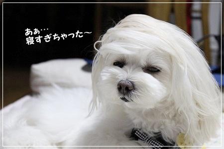すももん、髪!髪が!!(笑)