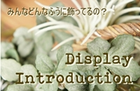 Display-Introduction-blog.jpg