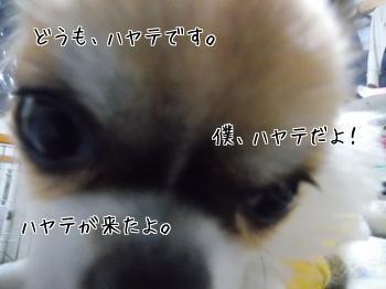 20140217_2.jpg