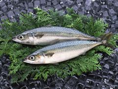 「青魚を食べれば食べるほど乳がんのリスクが低下!DHA、EPAの驚くべき効果」の続きを読む