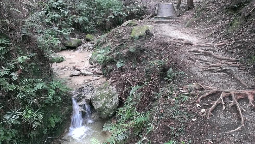 大阪府民の森9