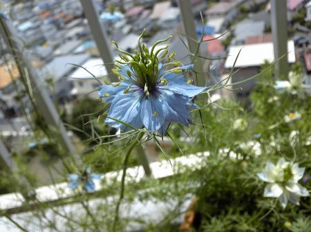 Garden20130521-2.jpg