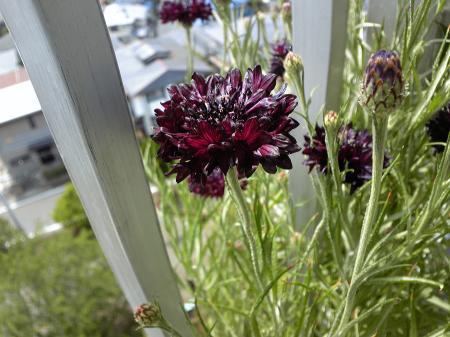 Garden20130521-4.jpg