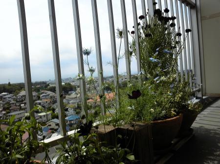 Garden20130521.jpg