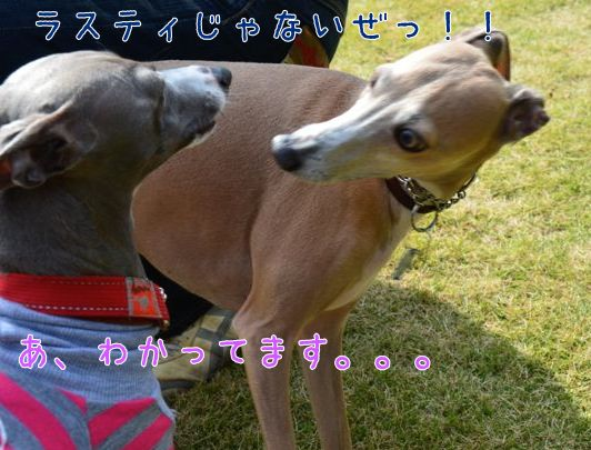 11_201410311457346bd.jpg