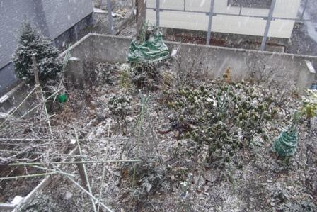 庭に降る 雪