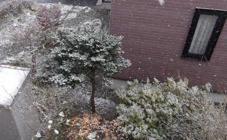 雪の季節到来