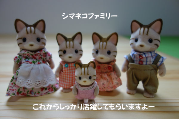 shimaneko.jpg
