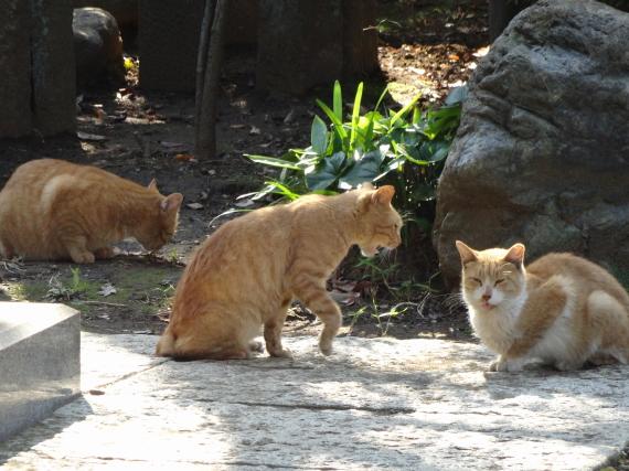 護国寺 猫