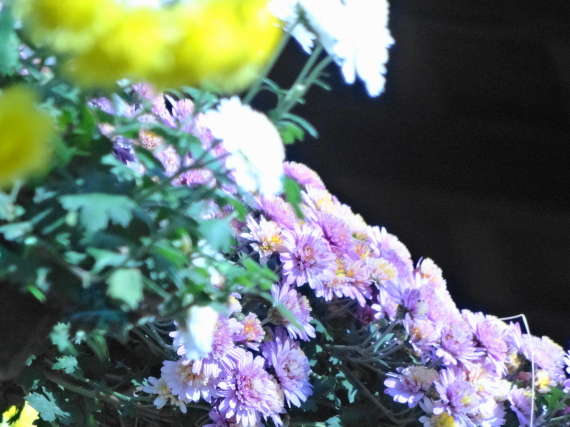 湯島天神 菊まつり2