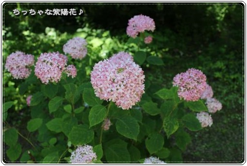 20130720tb-10.jpg