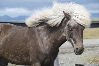 pony-175579_640.jpg