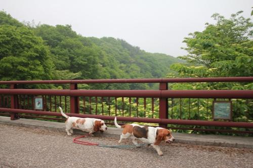 朝散歩03