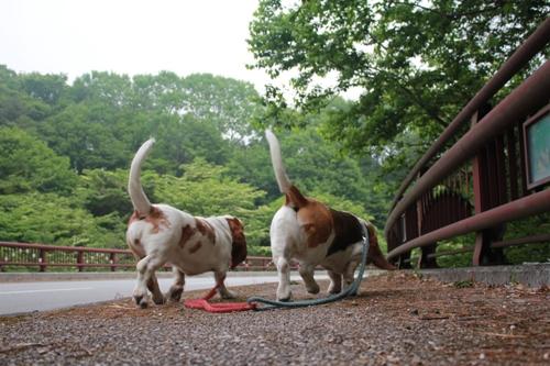 朝散歩02
