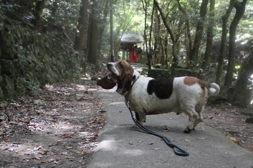 犬0014