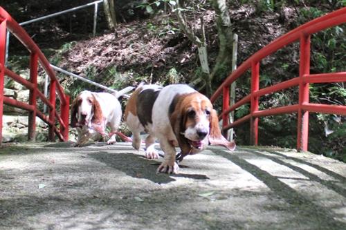 犬0022