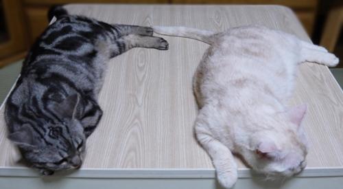 猫版ボルナツ