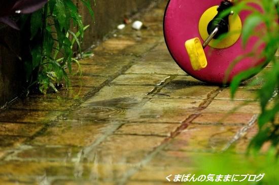 Nikon_20130601_125403_01.jpg