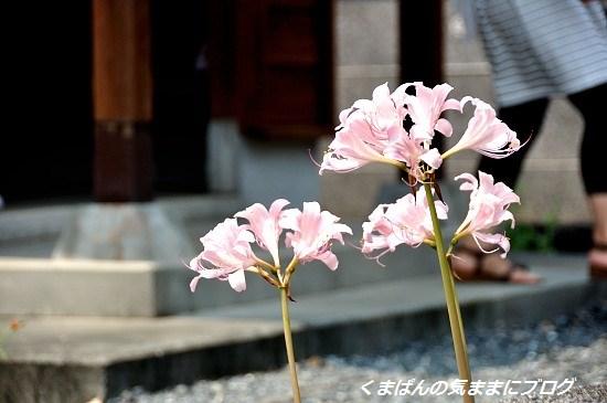 Nikon_20130814_124702.jpg