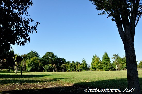 Nikon_20131012_155854.jpg