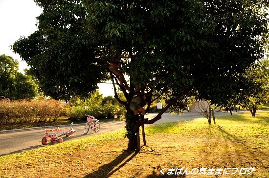 Nikon_20131012_164708.jpg