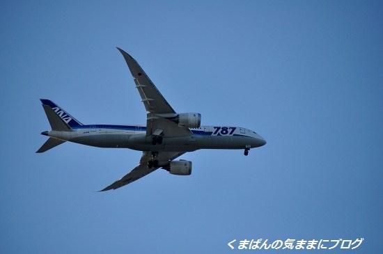 Nikon_20131012_170258.jpg