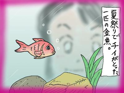 chinokingyo01.jpg