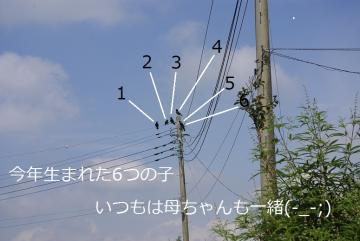 か~らすぅ_IGP3073