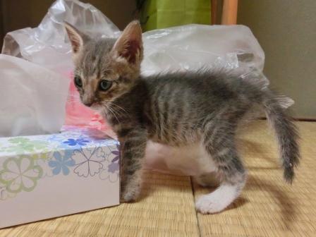 1115子猫 (6)