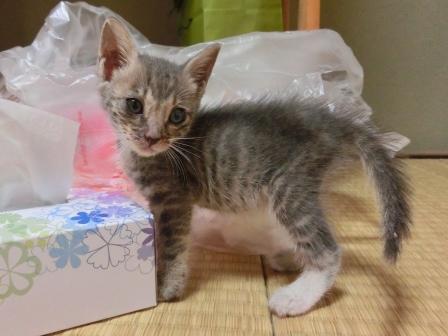 1115子猫 (5)
