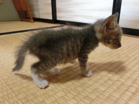 1115子猫 (2)