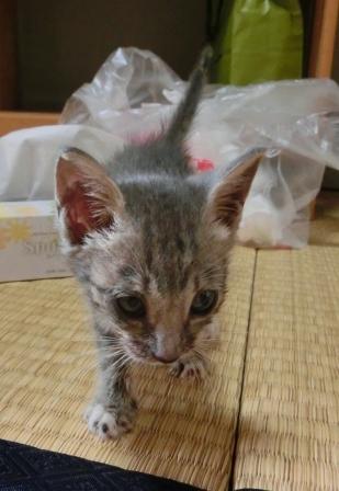 1115子猫 (8)