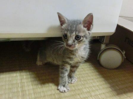 1117子猫 (10)