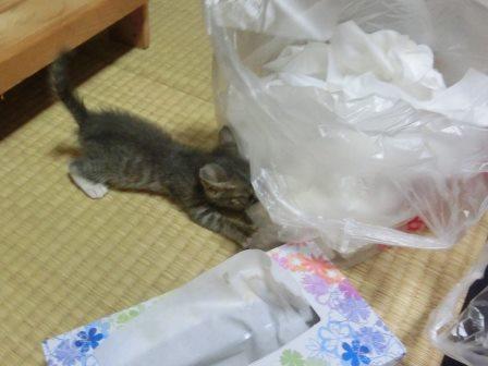 1117子猫 (9)