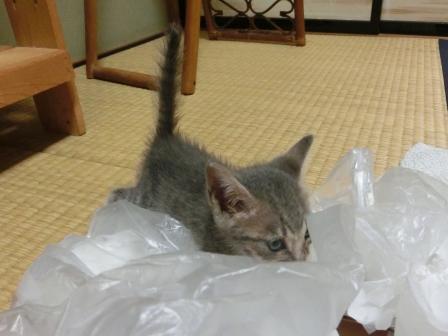 1122子猫 (3)