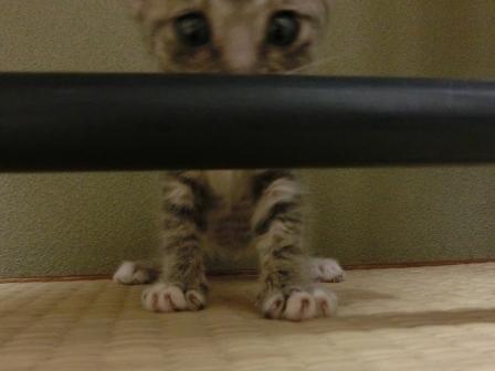 1123子猫 (6)