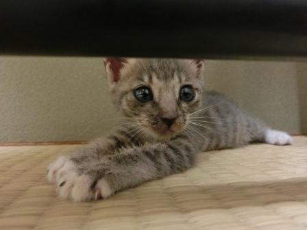 1123子猫 (2)