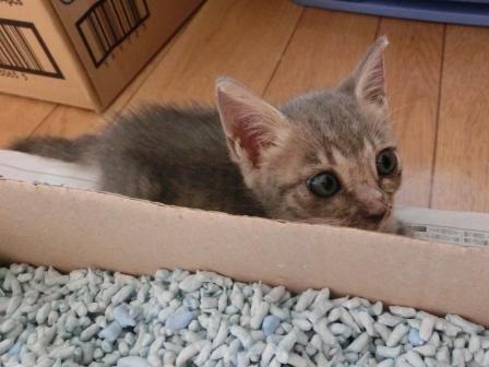 1131子猫 (8)