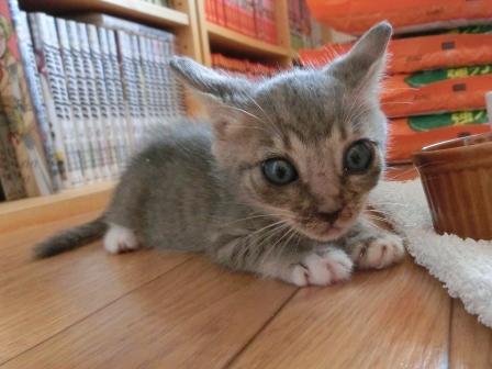 1131子猫 (7)
