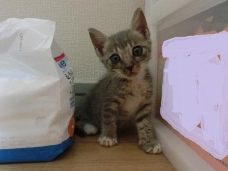 1131子猫 (4)