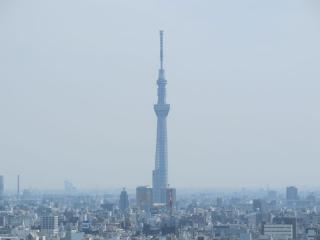 真東に見える東京スカイツリー