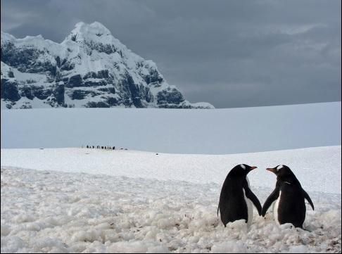 2014-1-11南極大陸ポートロックロイのペンギン